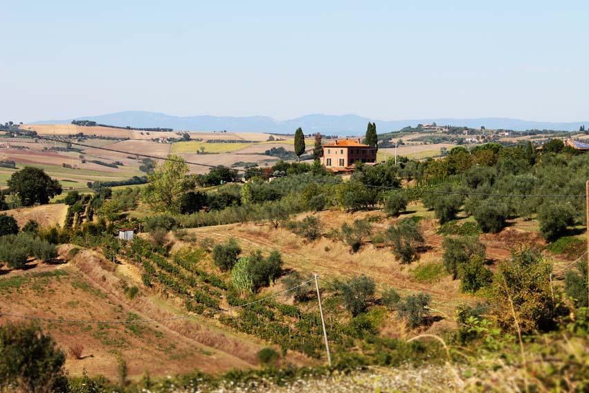 tuscany vine 01