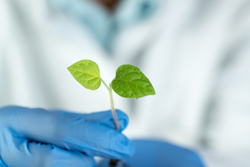 Closeup of green plant in a scientist hand